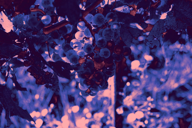 Weingut Payr About Im Einklang Mit Der Natur 01